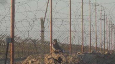 Photo of ببرک های کوچولو : خاطرات رستم آلبوغبیش