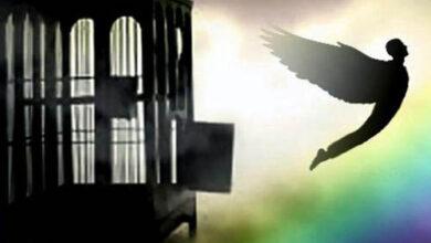 Photo of خدایا کبوترانمان را همت پرواز عطا کن